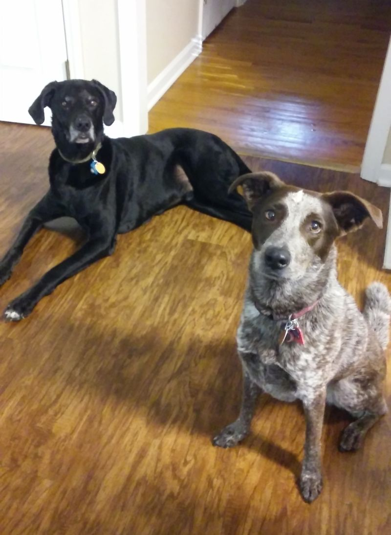 Duke & Callie